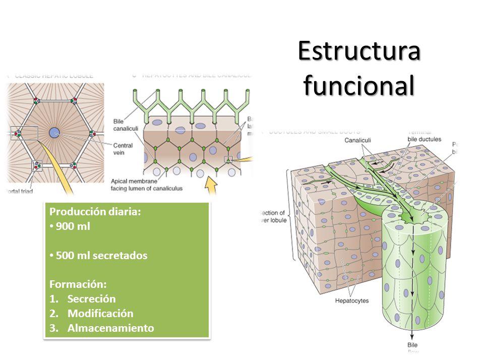 Estructura funcional Producción diaria: 900 ml 500 ml secretados