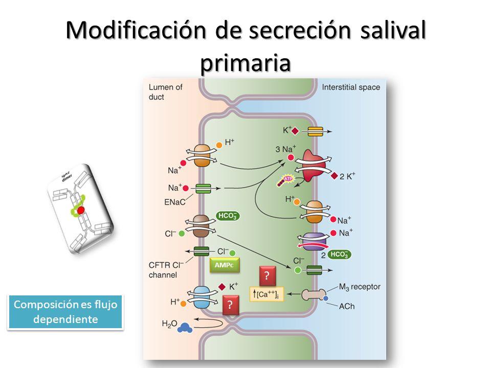 Modificación de secreción salival primaria