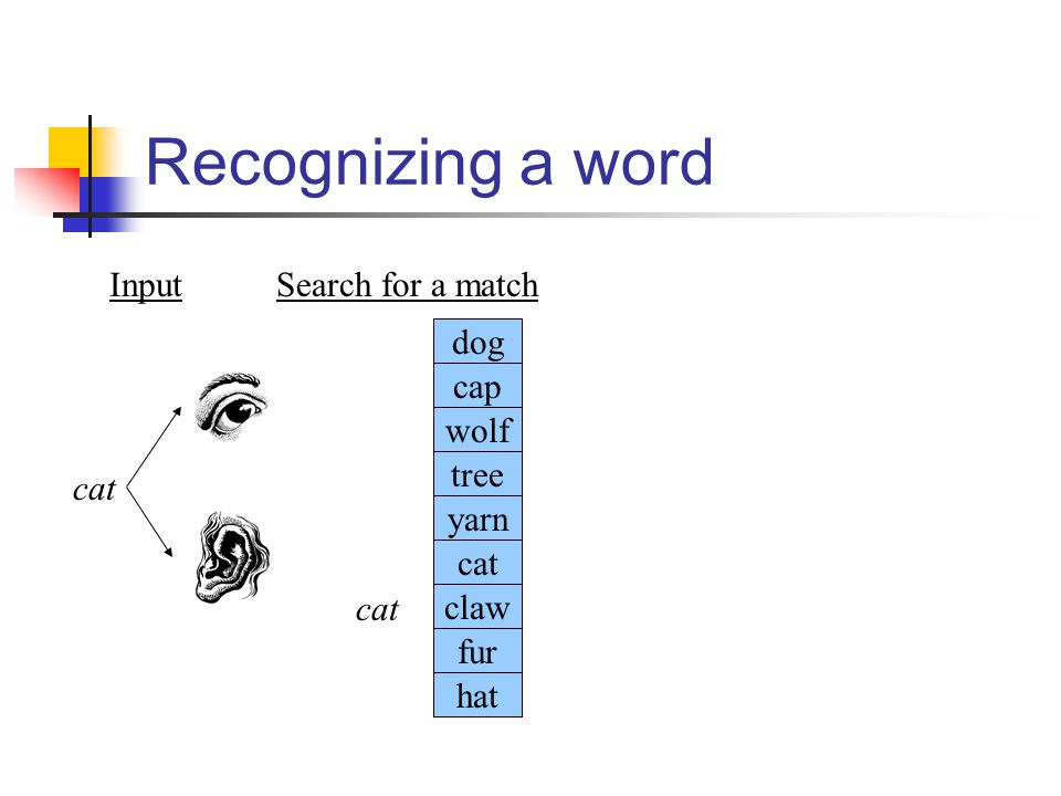 Recognizing a word cat Input Search for a match dog cap wolf tree yarn
