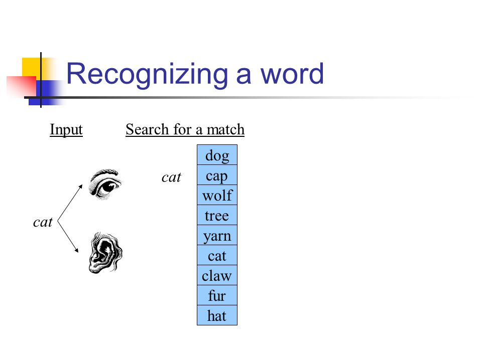 Recognizing a word cat Input cat dog cap wolf tree yarn claw fur hat