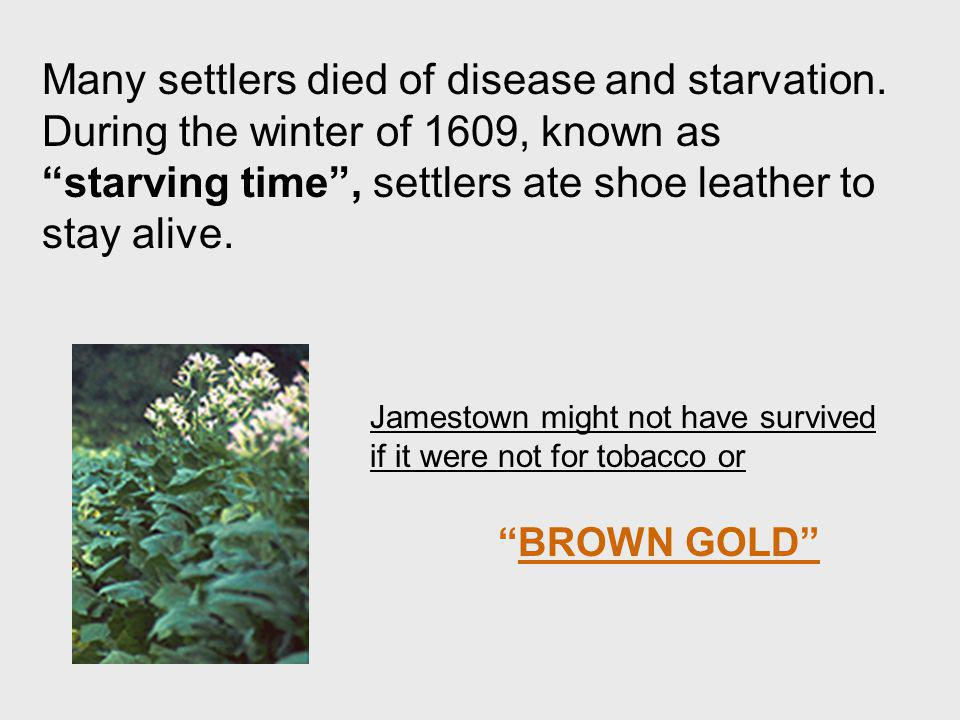 Many settlers died of disease and starvation