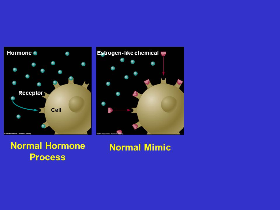 Normal Hormone Process