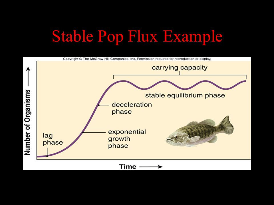 Stable Pop Flux Example