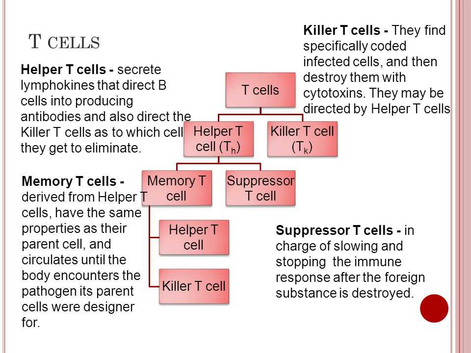 T cells Killer T cells - They find specifically coded infected cells, and then destroy them with cytotoxins. They may be directed by Helper T cells.