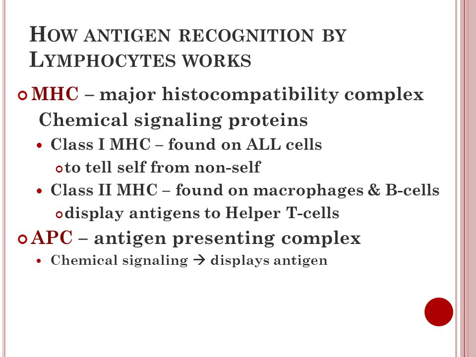 How antigen recognition by Lymphocytes works