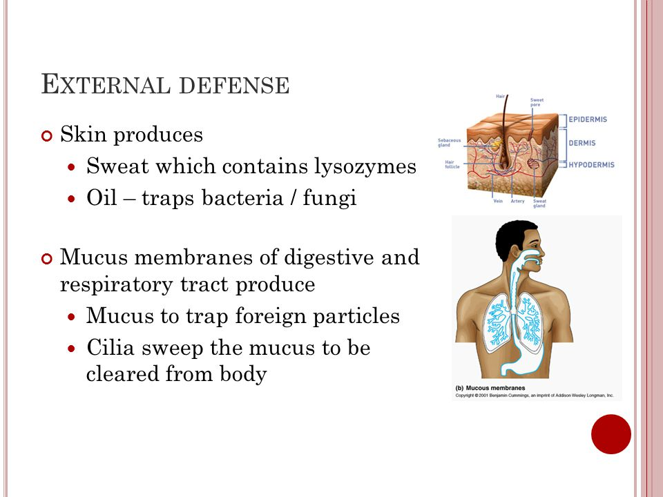 External defense Skin produces Sweat which contains lysozymes