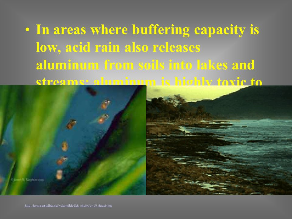 In areas where buffering capacity is low, acid rain also releases aluminum from soils into lakes and streams; aluminum is highly toxic to many species of aquatic organisms.