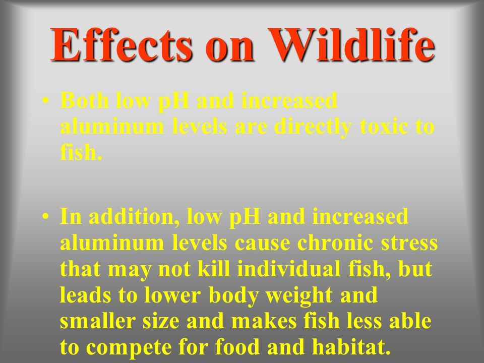 Effects on Wildlife Both low pH and increased aluminum levels are directly toxic to fish.