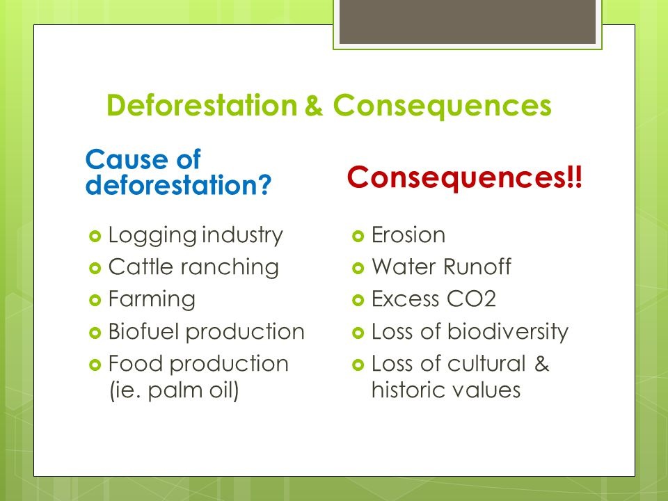 Deforestation & Consequences