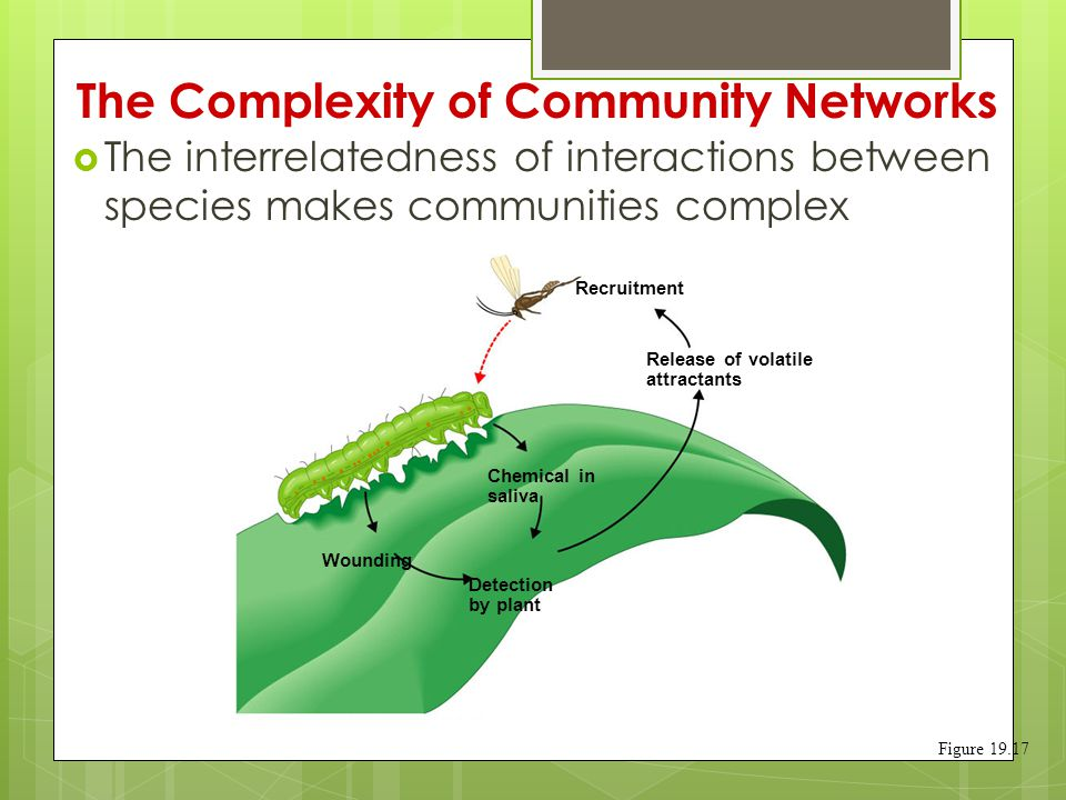 The Complexity of Community Networks