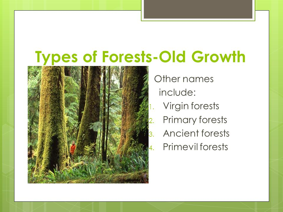 Types of Forests-Old Growth