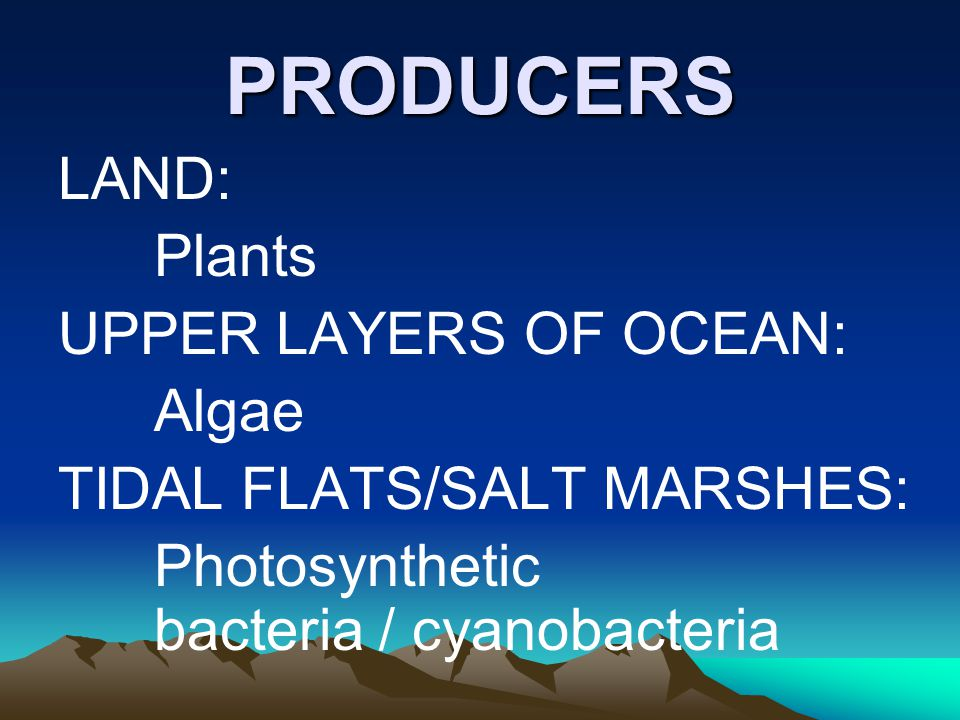 PRODUCERS LAND: Plants UPPER LAYERS OF OCEAN: Algae