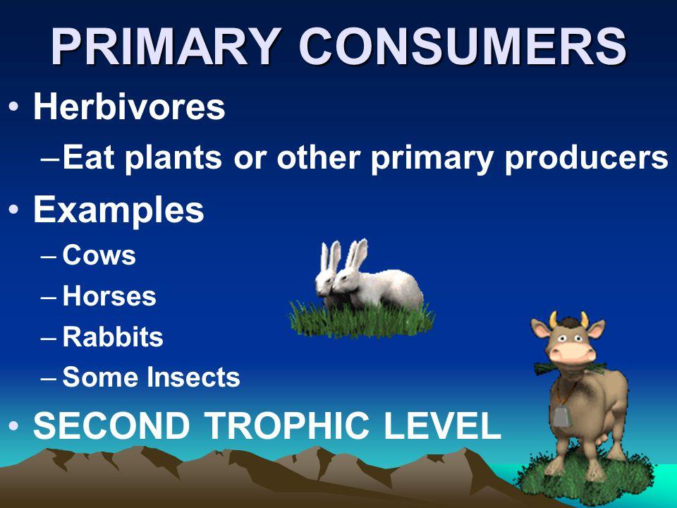 PRIMARY CONSUMERS Herbivores Examples SECOND TROPHIC LEVEL