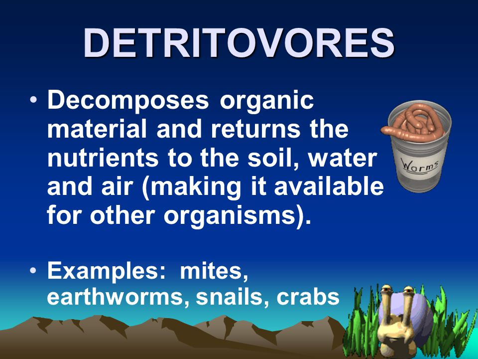 DETRITOVORES Decomposes organic material and returns the nutrients to the soil, water and air (making it available for other organisms).