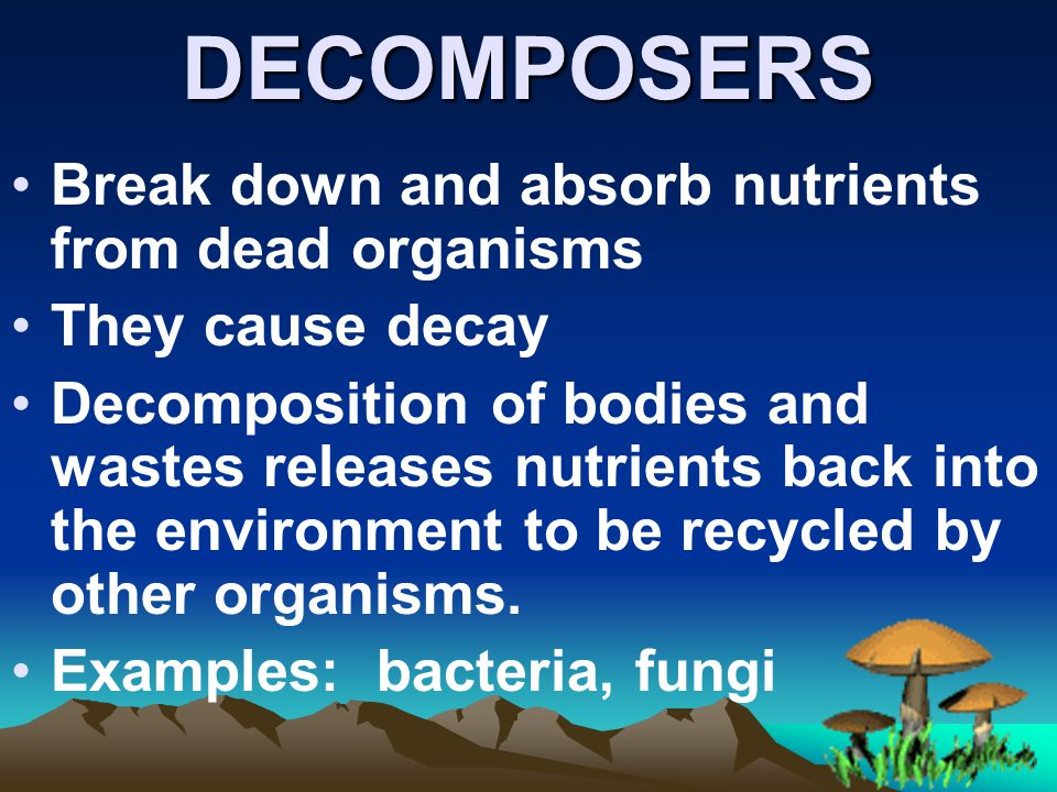 DECOMPOSERS Break down and absorb nutrients from dead organisms