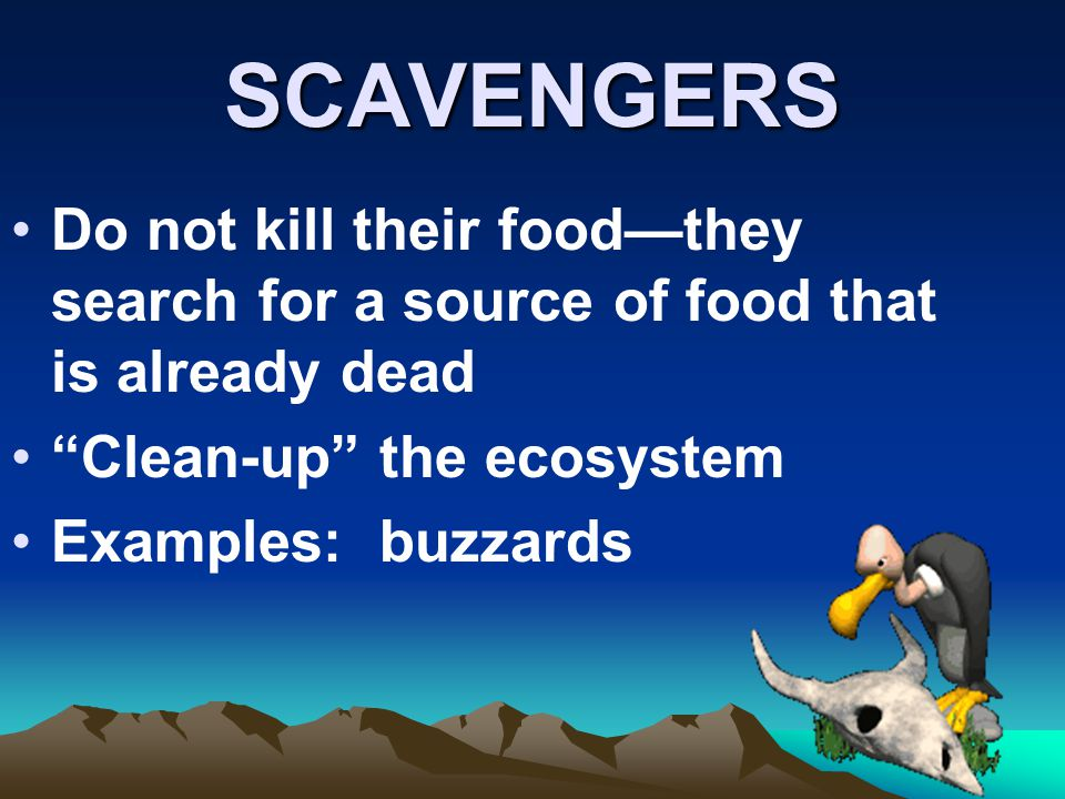 SCAVENGERS Do not kill their food—they search for a source of food that is already dead. Clean-up the ecosystem.