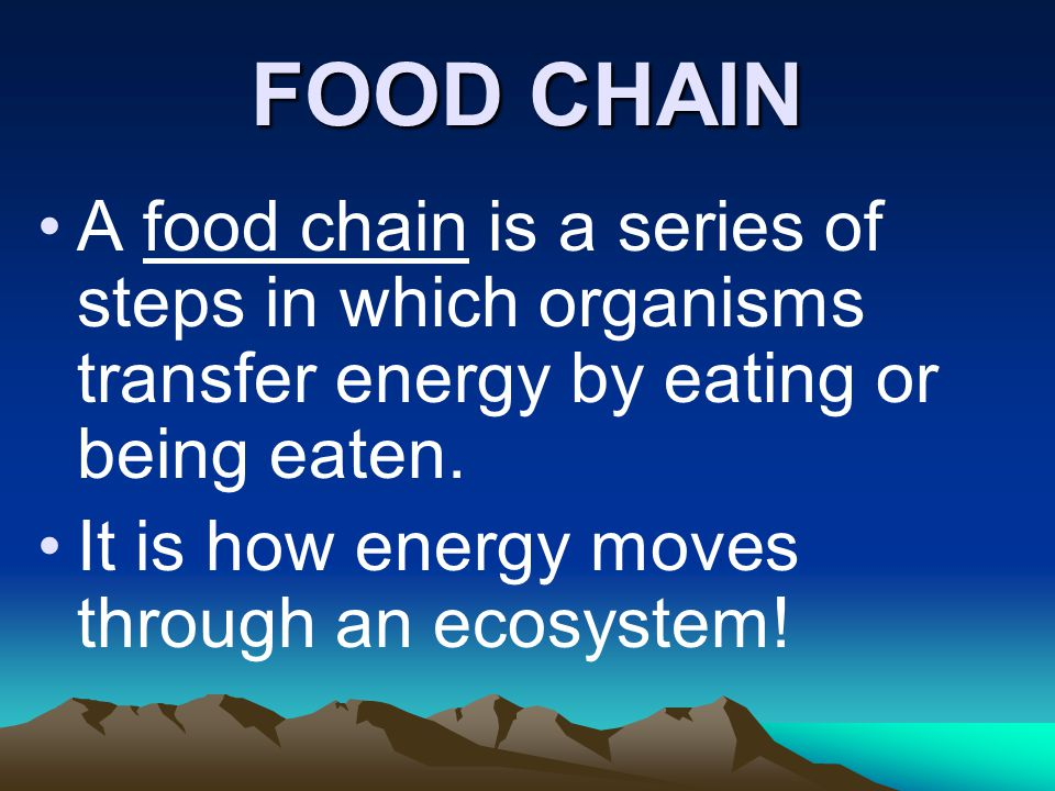 FOOD CHAIN A food chain is a series of steps in which organisms transfer energy by eating or being eaten.