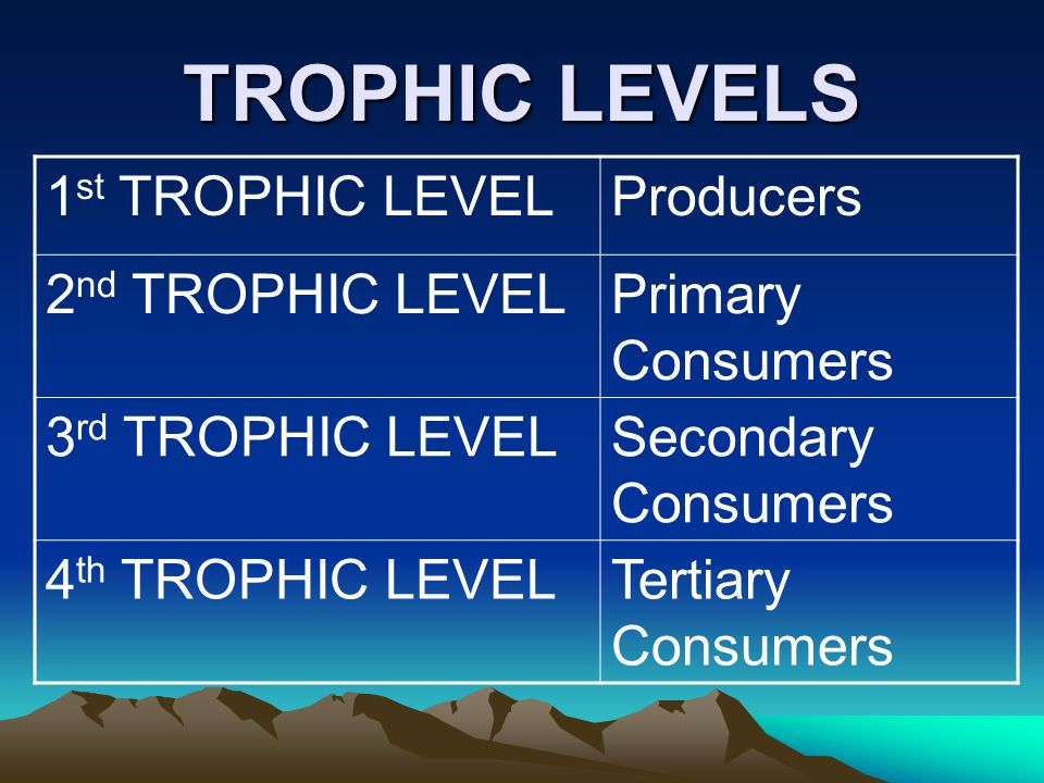 TROPHIC LEVELS 1st TROPHIC LEVEL Producers 2nd TROPHIC LEVEL