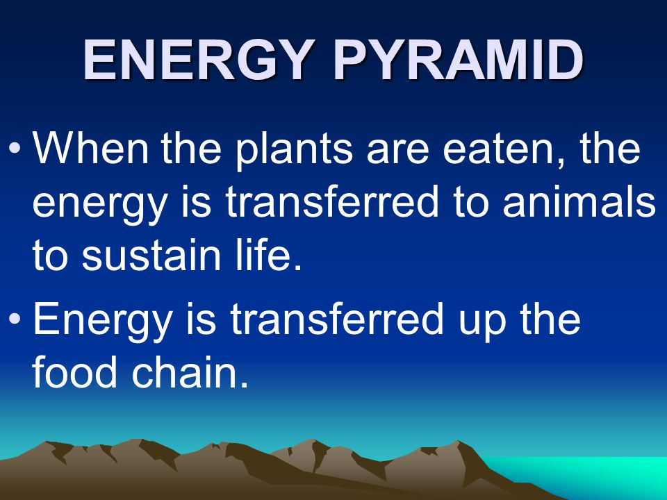 ENERGY PYRAMID When the plants are eaten, the energy is transferred to animals to sustain life.