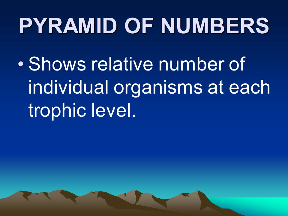 PYRAMID OF NUMBERS Shows relative number of individual organisms at each trophic level.