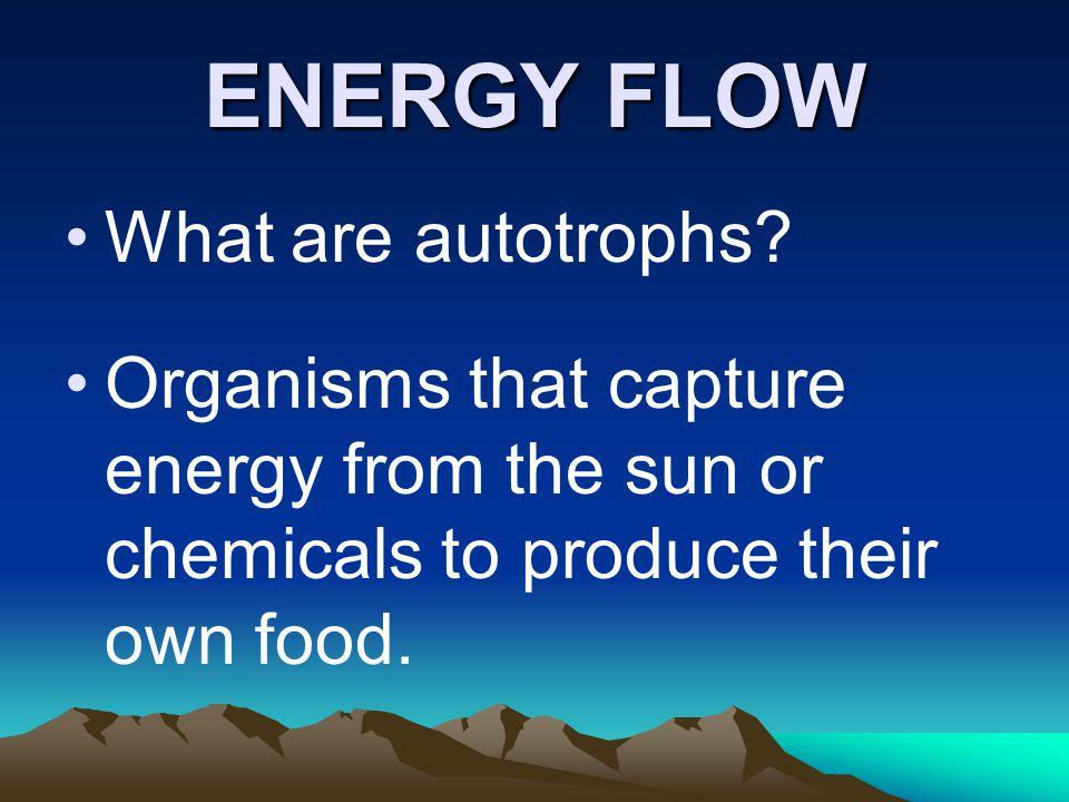 ENERGY FLOW What are autotrophs