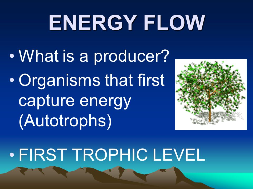 ENERGY FLOW What is a producer