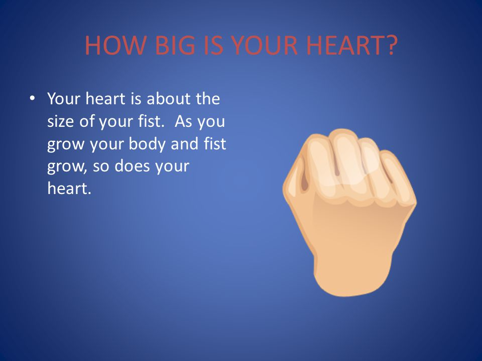 HOW BIG IS YOUR HEART. Your heart is about the size of your fist.