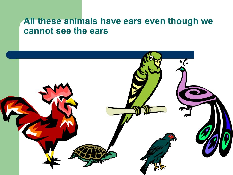 All these animals have ears even though we cannot see the ears