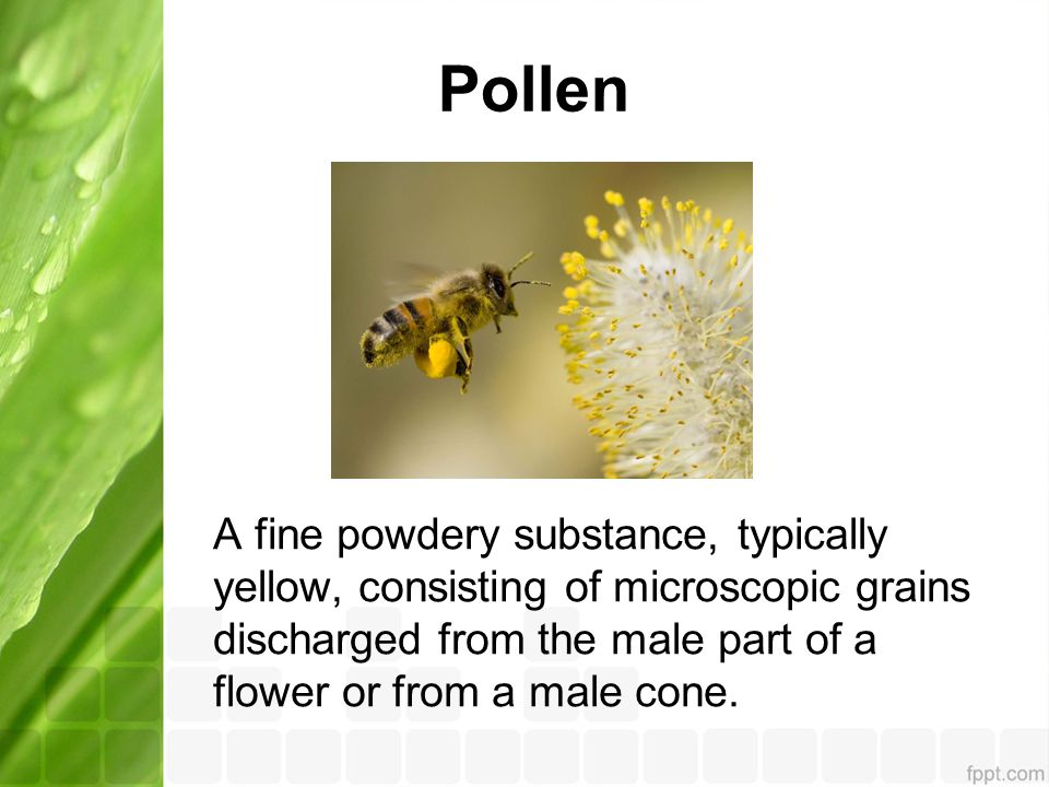 Pollen A fine powdery substance, typically yellow, consisting of microscopic grains discharged from the male part of a flower or from a male cone.