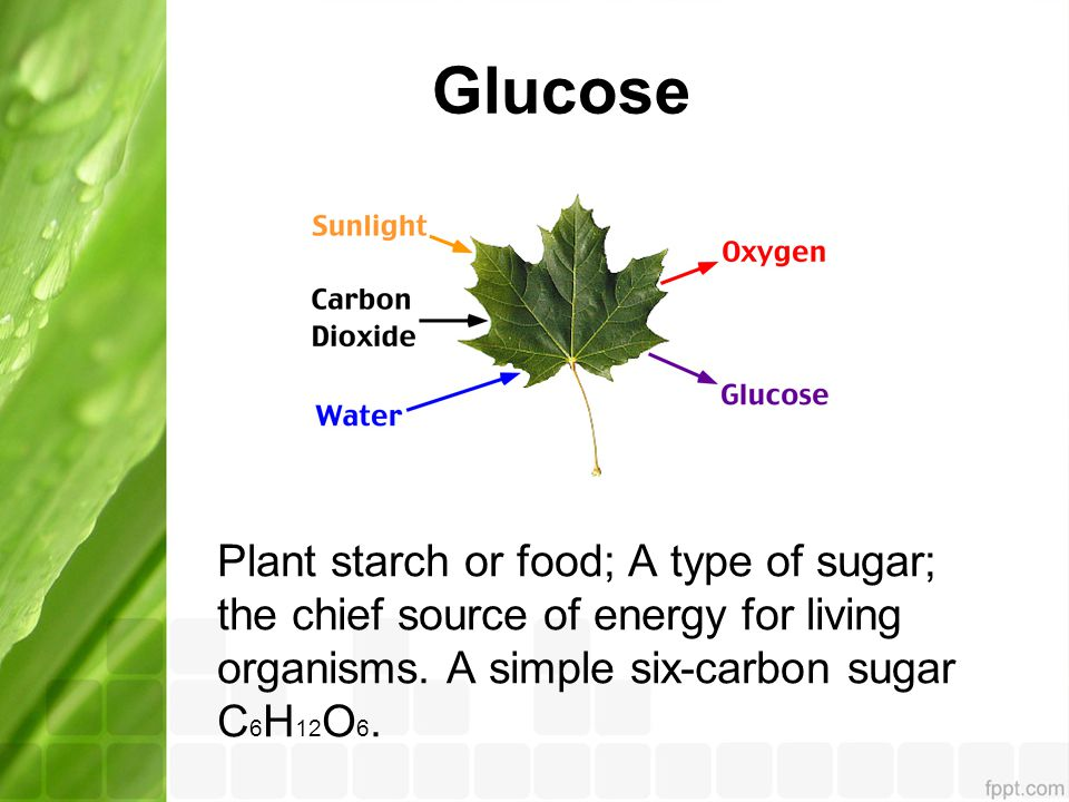 Glucose Plant starch or food; A type of sugar; the chief source of energy for living organisms.
