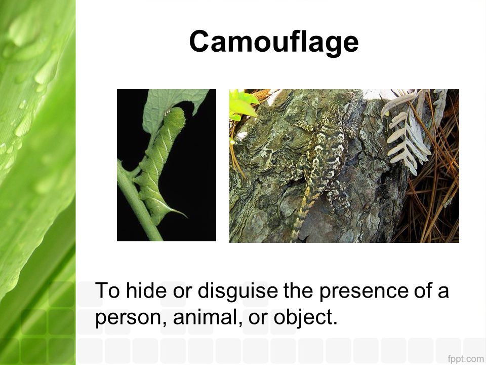 Camouflage To hide or disguise the presence of a person, animal, or object.