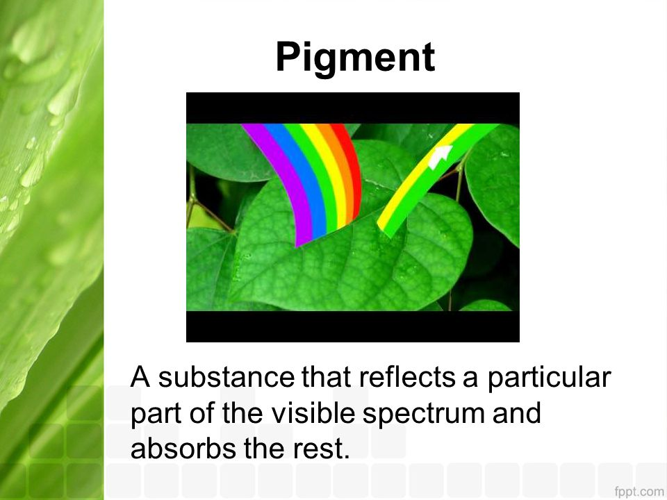 Pigment A substance that reflects a particular part of the visible spectrum and absorbs the rest.