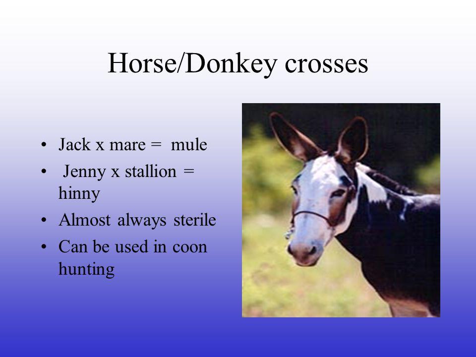 Horse/Donkey crosses Jack x mare = mule Jenny x stallion = hinny