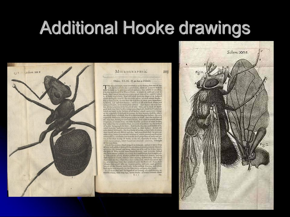 Additional Hooke drawings