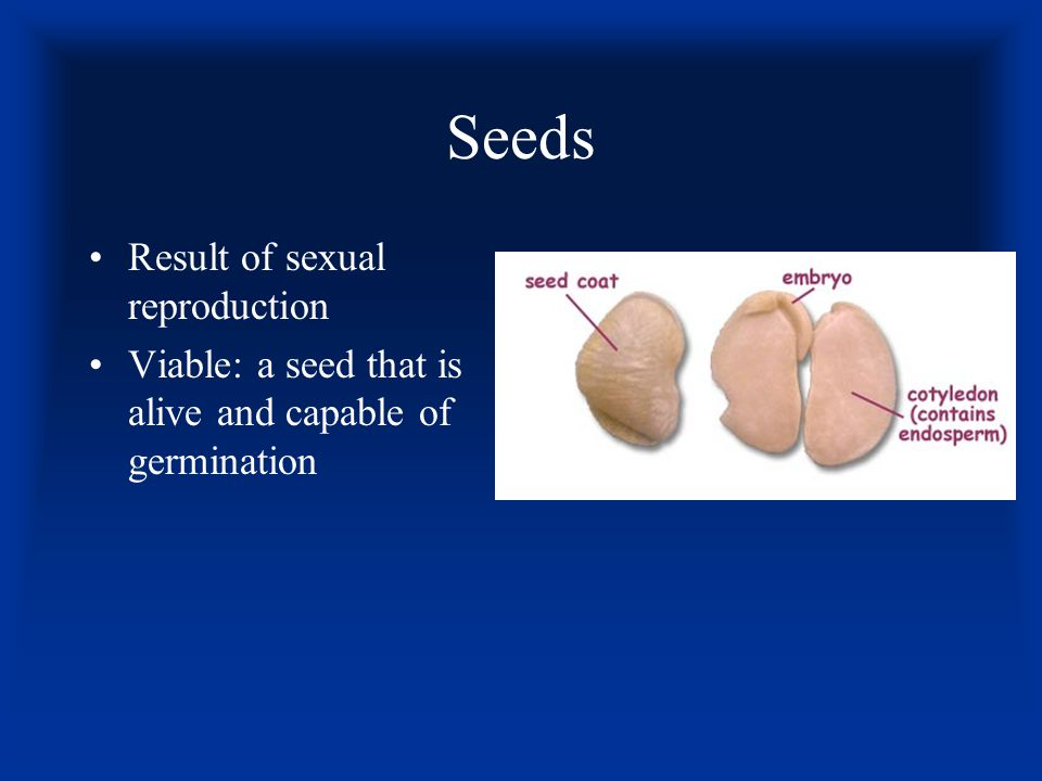 Seeds Result of sexual reproduction