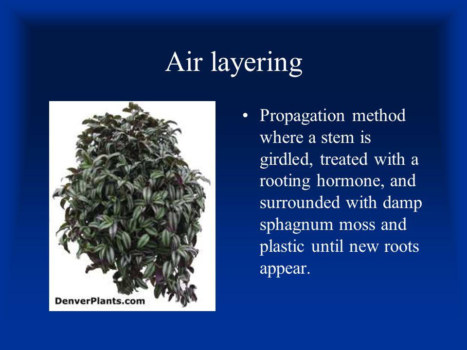 Air layering