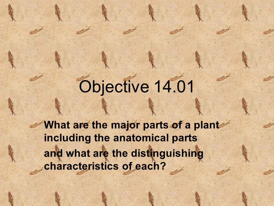 Objective 14.01 What are the major parts of a plant including the anatomical parts.