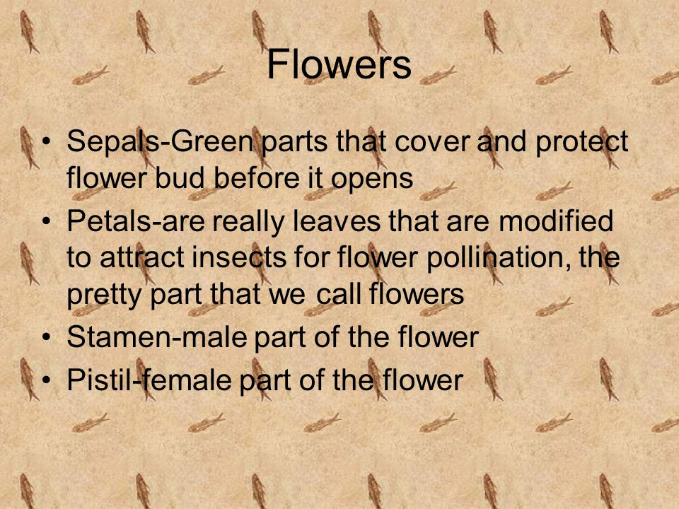 Flowers Sepals-Green parts that cover and protect flower bud before it opens.