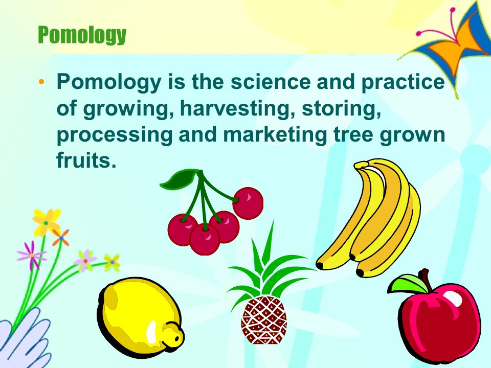 Pomology Pomology is the science and practice of growing, harvesting, storing, processing and marketing tree grown fruits.