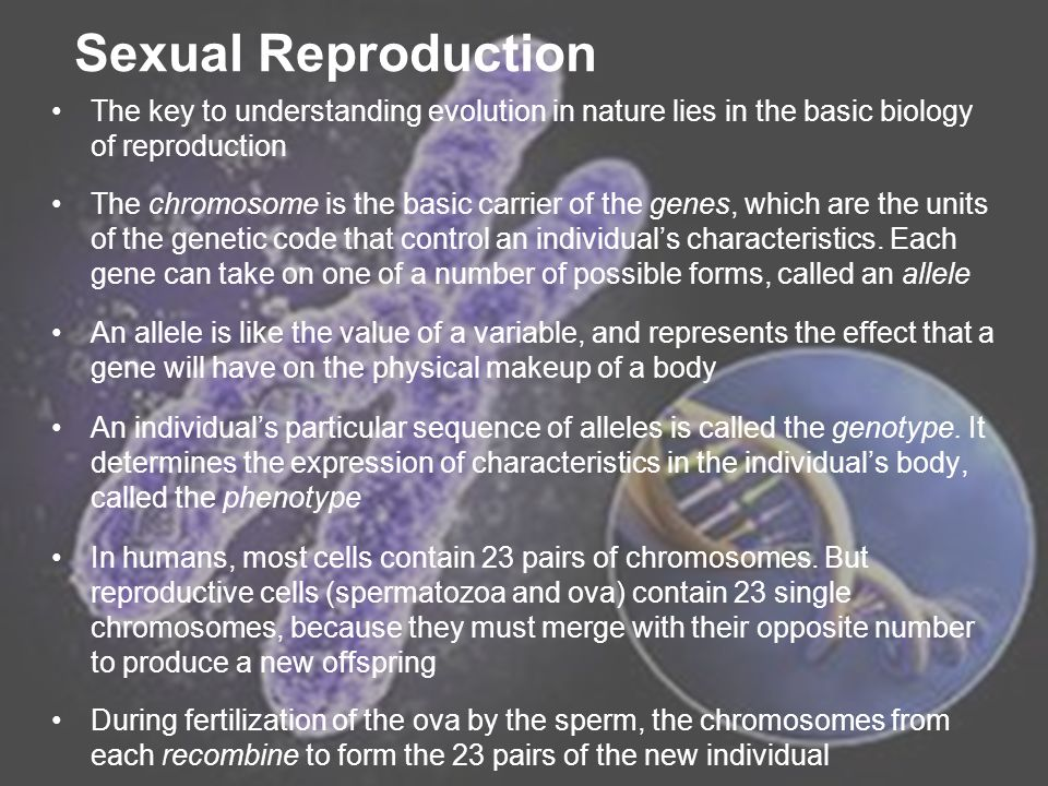 Sexual Reproduction The key to understanding evolution in nature lies in the basic biology of reproduction.