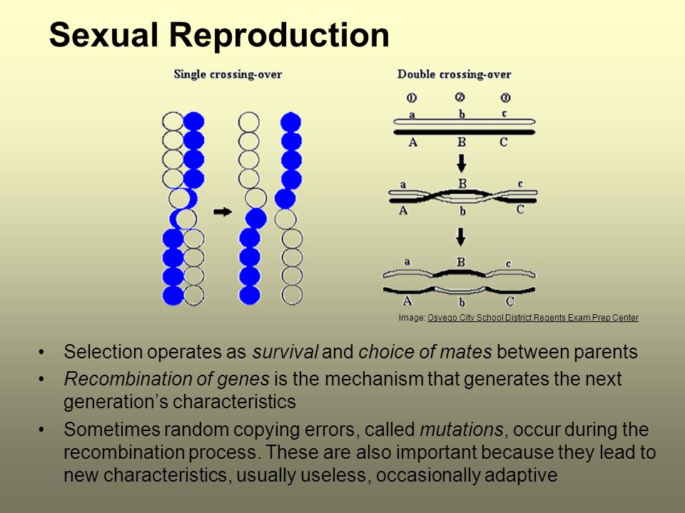 Sexual Reproduction Image: Osvego City School District Regents Exam Prep Center. Selection operates as survival and choice of mates between parents.