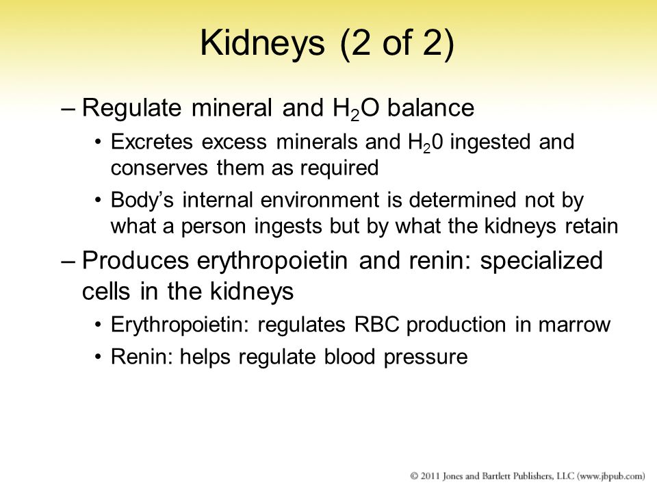 Kidneys (2 of 2) Regulate mineral and H2O balance