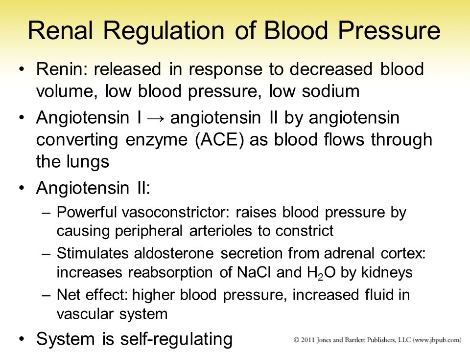Renal Regulation of Blood Pressure