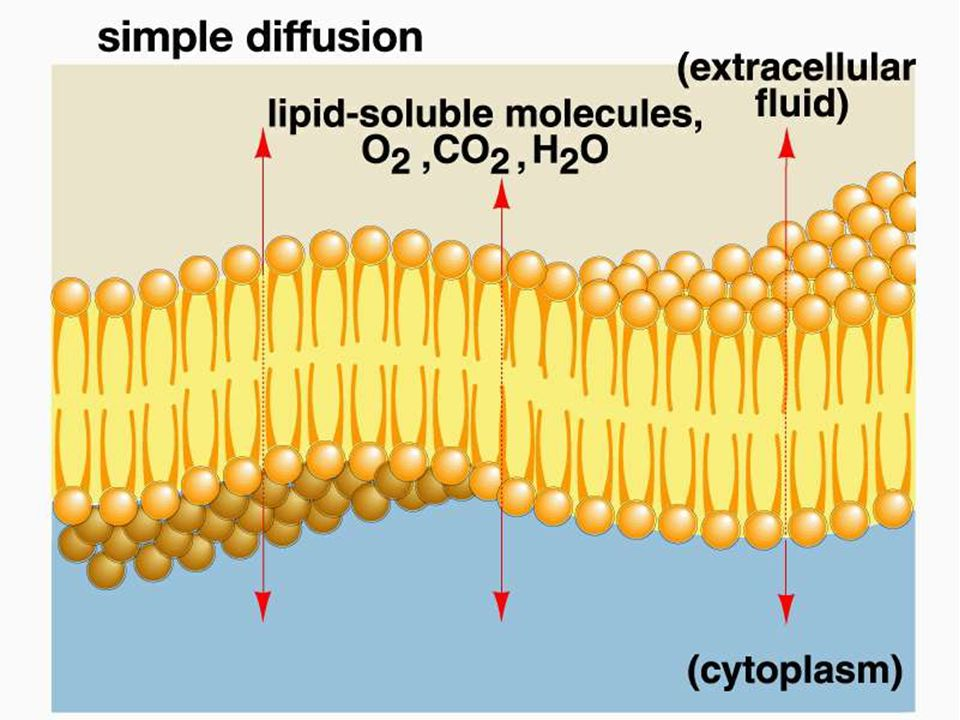 Figure 04.3a Title: Diffusion through the plasma membrane. Caption: