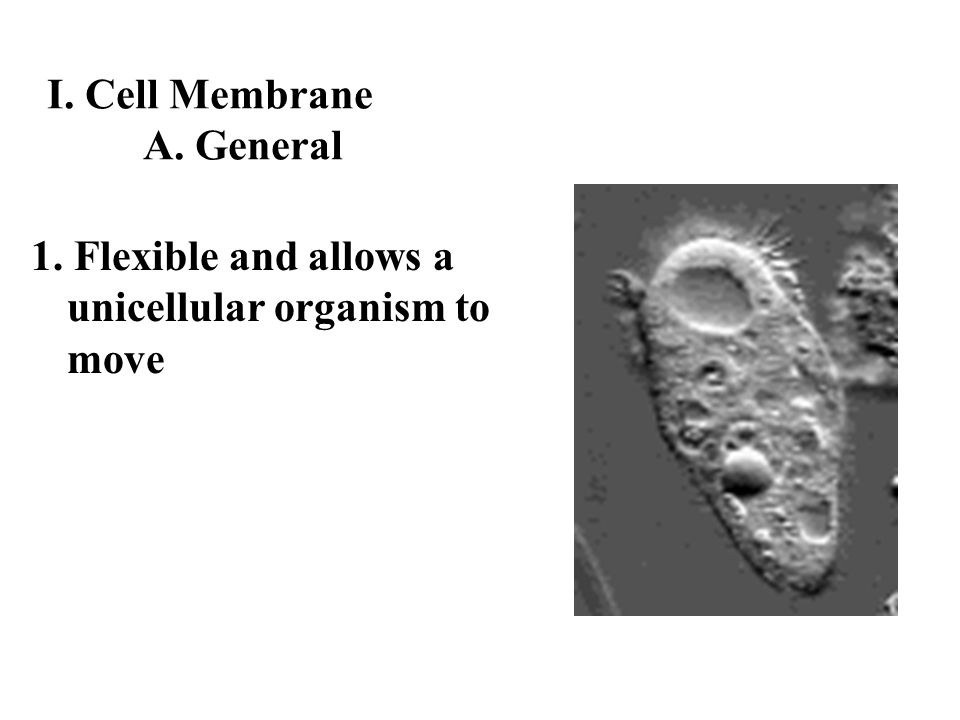 I. Cell Membrane A. General