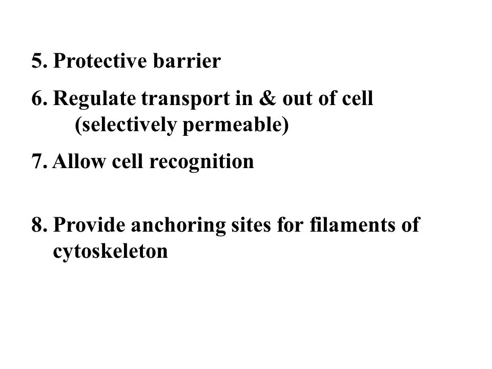 5. Protective barrier 6. Regulate transport in & out of cell (selectively permeable) 7. Allow cell recognition.