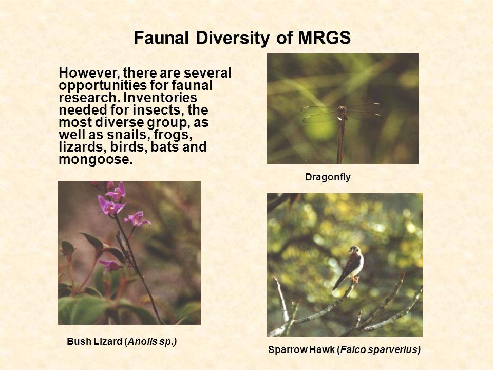 Faunal Diversity of MRGS