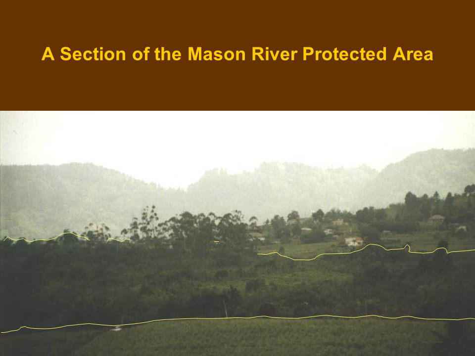 A Section of the Mason River Protected Area