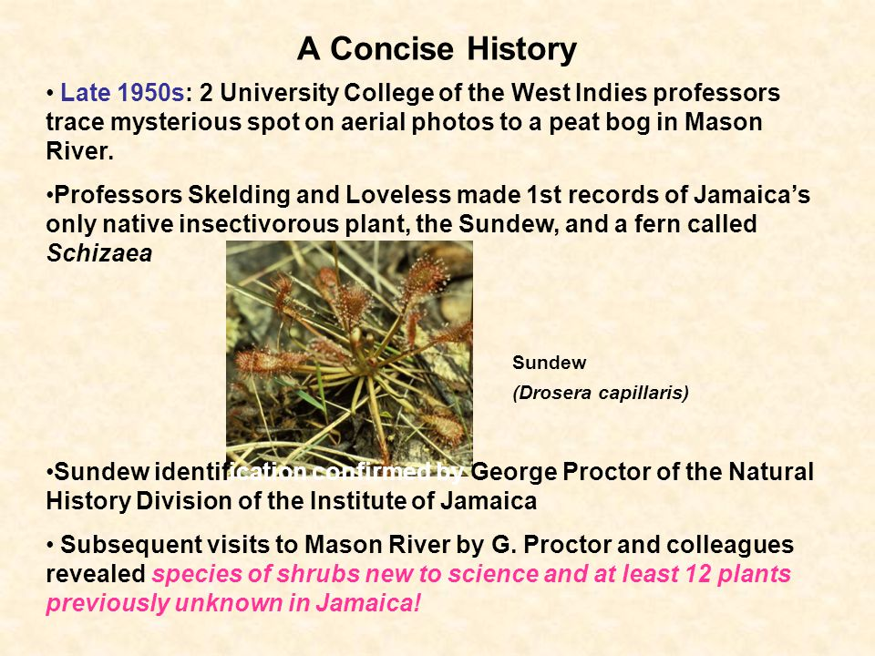 A Concise History Late 1950s: 2 University College of the West Indies professors trace mysterious spot on aerial photos to a peat bog in Mason River.