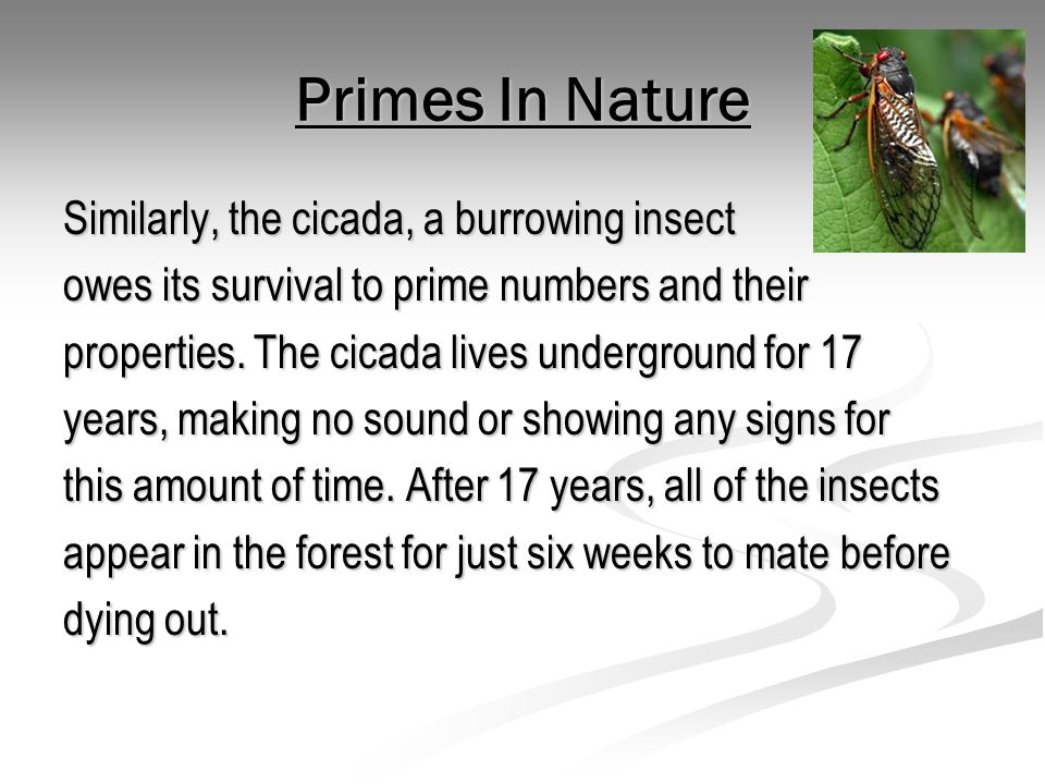 Primes In Nature Similarly, the cicada, a burrowing insect